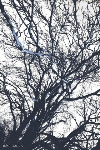 iphone landscape wallpaper Graphic winter tree
