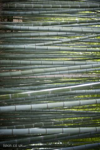 iphone landscape wallpaper bamboo forest