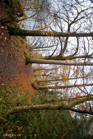 iphone landscape wallpaper autumn woodland walk
