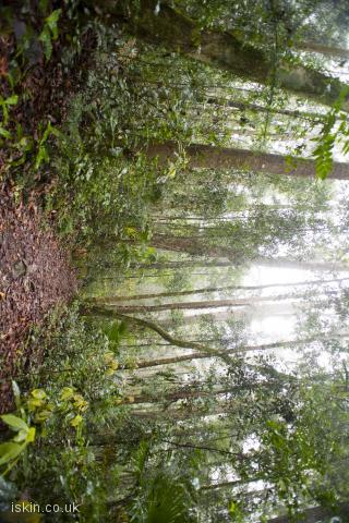 iphone landscape wallpaper rainforest footpath