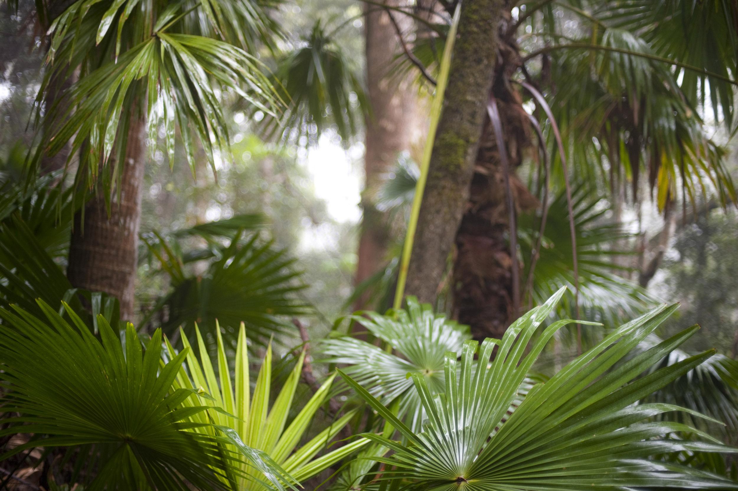 Tropical Rainforest Desktop Wallpaper